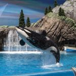 SeaWorld® San Diego