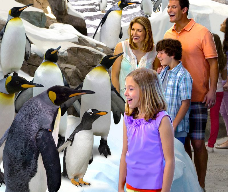 Day Camps, Sleepovers, and Other Educational Experiences at SeaWorld® Orlando