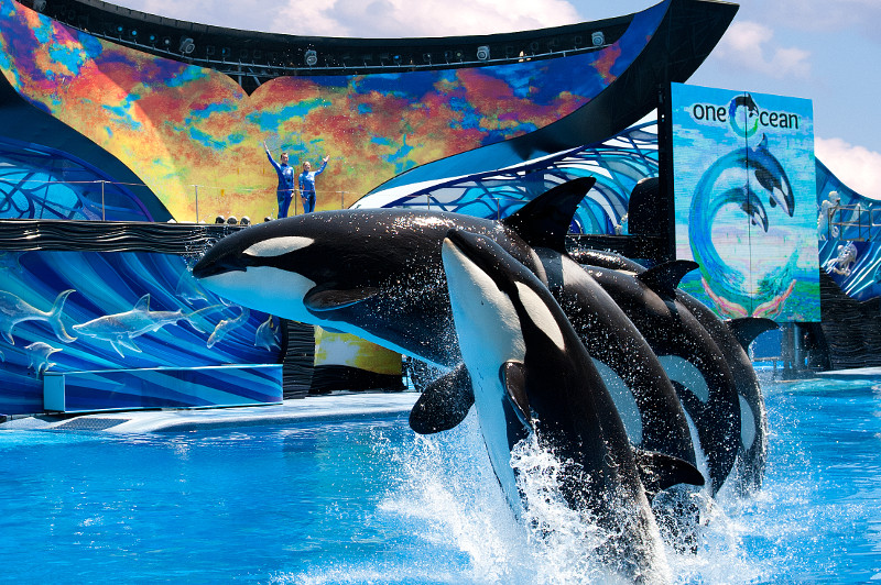 The Original Shamu The Whale