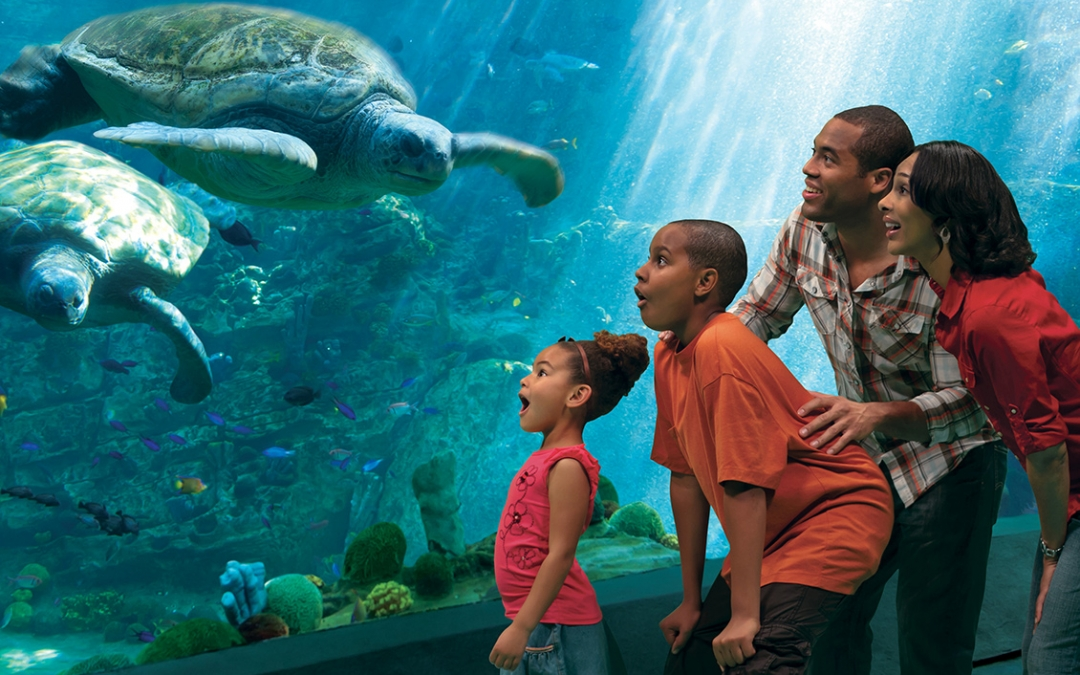 SeaWorld® San Diego & San Diego Zoo – Bundle and Save