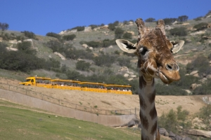 San Diego Safari Park Discount