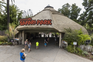 San Diego Zoo Safari Park Rides