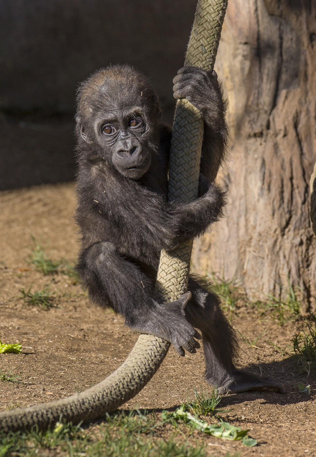 San Diego Zoo Safari Park - aRes Travel
