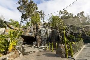 San Diego Zoo Senior