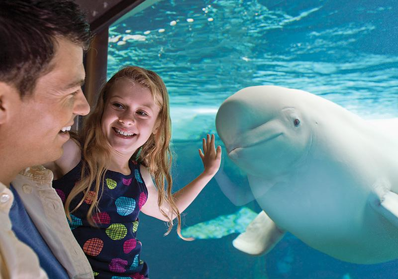 SeaWorld® Orlando Discount Tickets