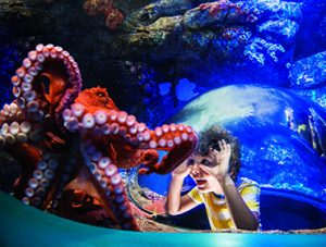 SeaWorld® Pass Discounts