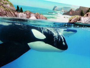 SeaWorld® San Diego Discount Tickets