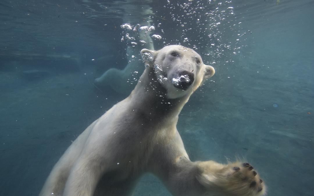 SeaWorld® San Diego & San Diego Zoo – Bundle and Save