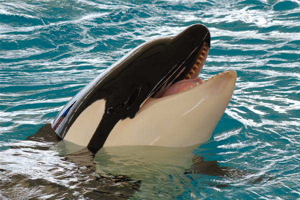 SeaWorld® San Antonio Discounts