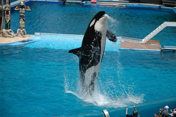 SeaWorld® San Antonio Ticket Deals