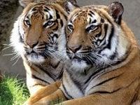 Cincinnati Zoo Ticket Packages