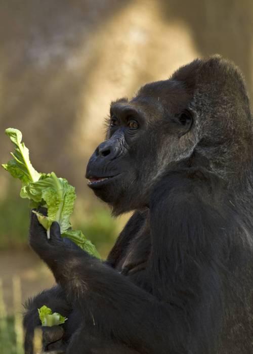 San Diego Zoo Safari Park Planning Guide