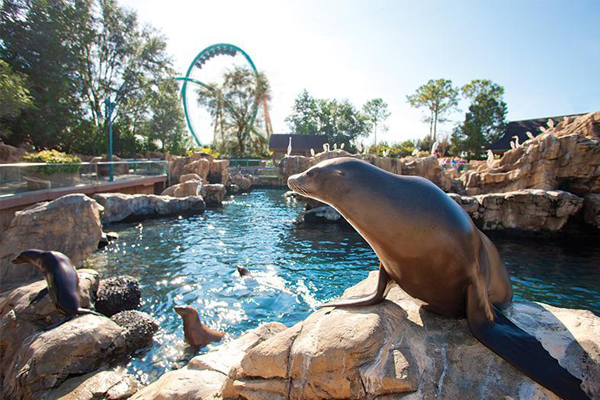 SeaWorld® Orlando Holiday Packages