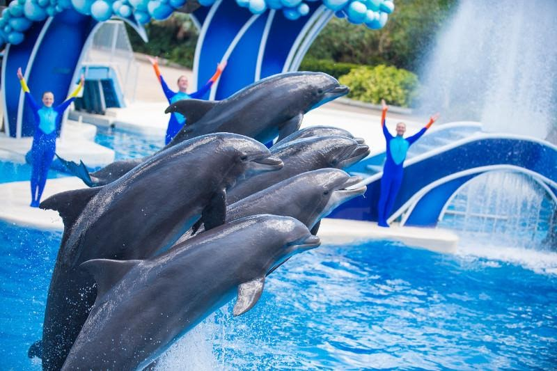 4 Live Animal Attractions