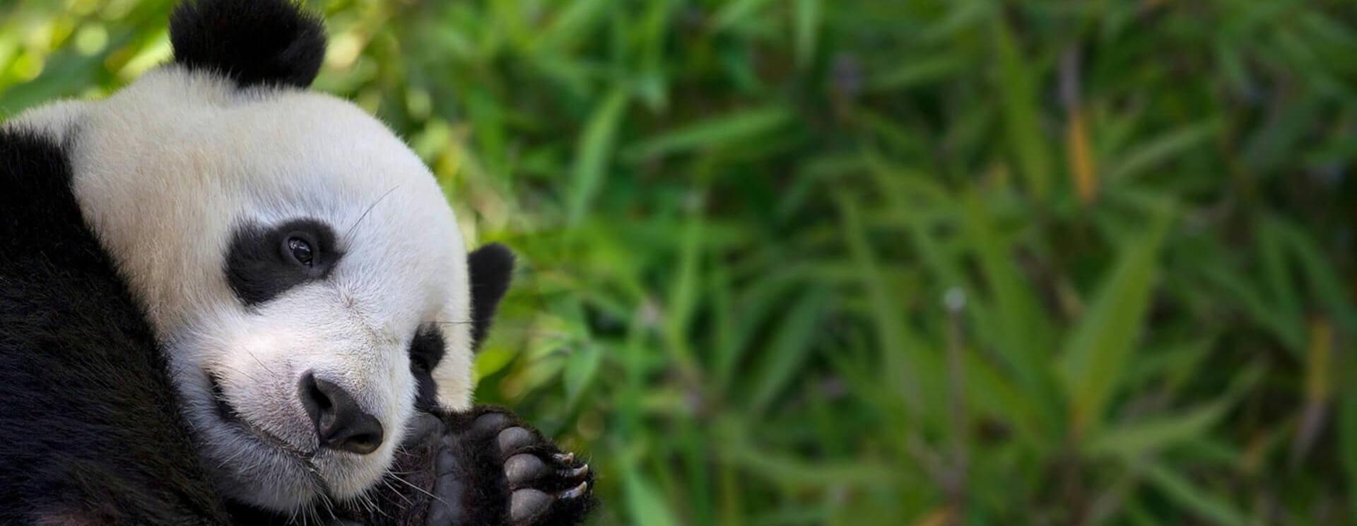 San Diego Zoo Safari Park Tickets Prices Ares Travel