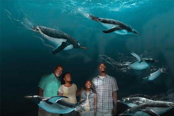 sister park Aquatica Orlando