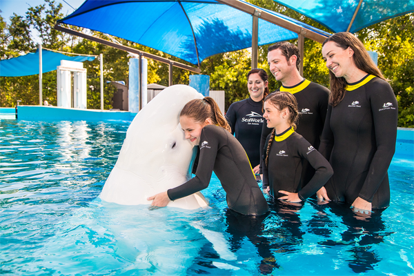 Seaworld® San Antonio Tickets and Hotel Packages