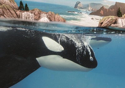SeaWorld® San Diego Planning Guide