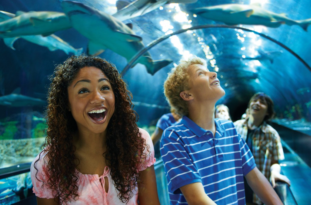 What Is the Least Expensive Way to Purchase SeaWorld Orlando Tickets?