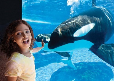SeaWorld® Orlando Discount Ticket