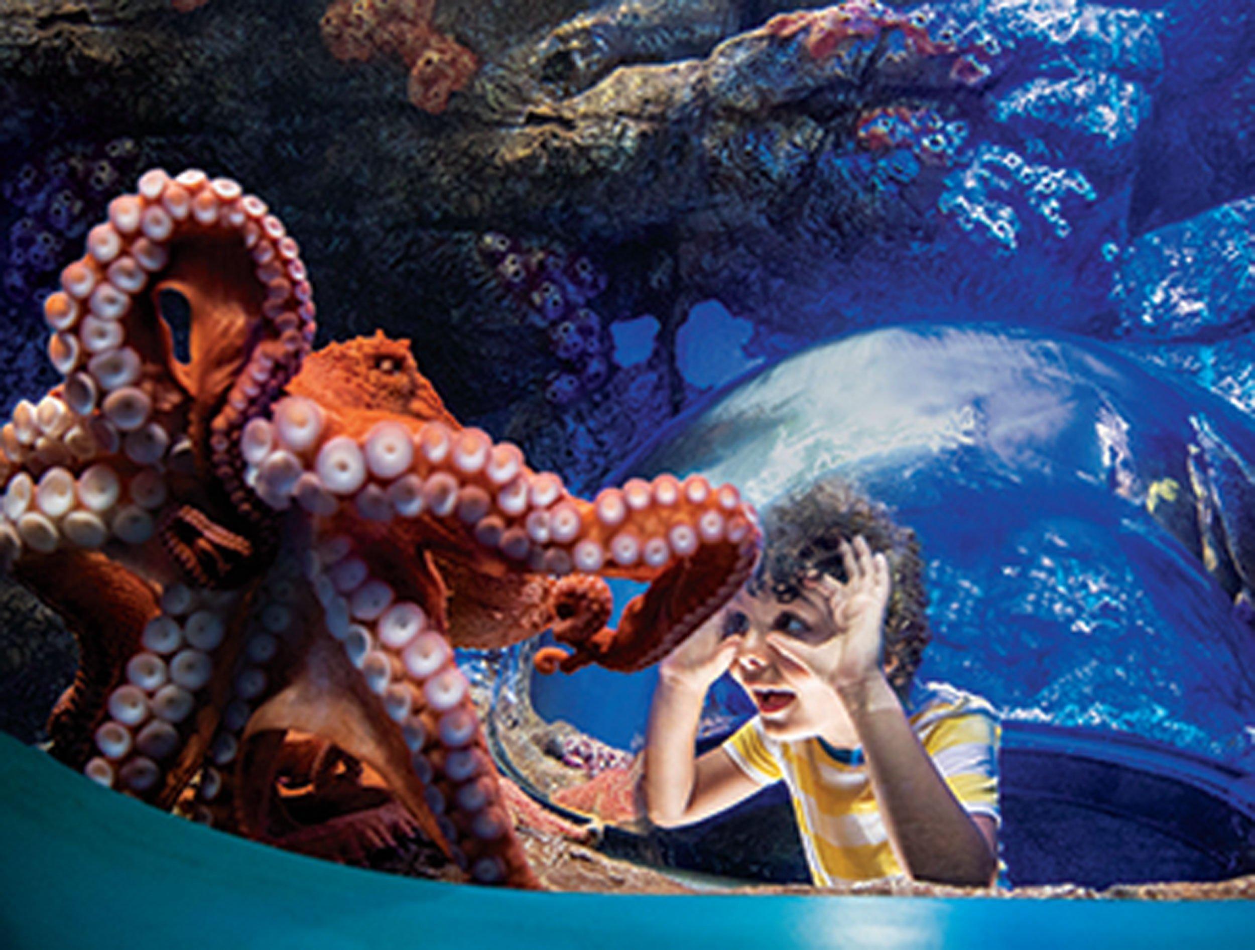 majestic sea creatures