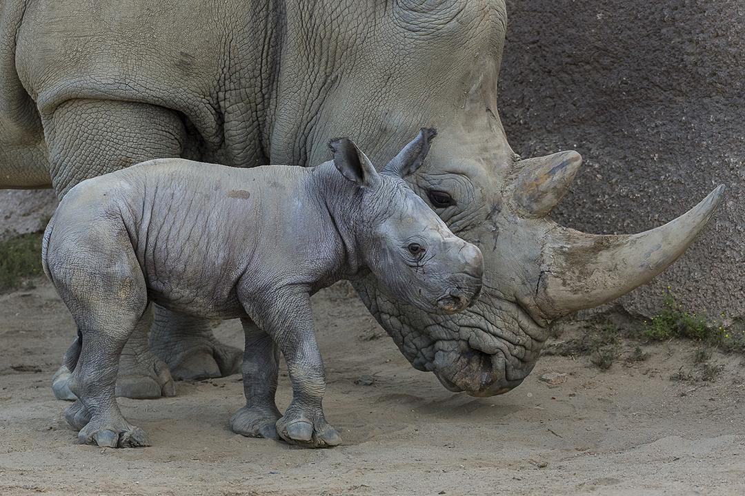 Cheap San Diego Zoo Safari Park